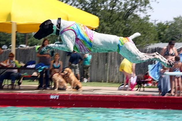 Annual K 9 Splash Fest
