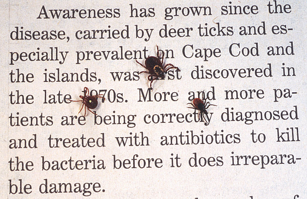 Close Up Of An Adult Female Deer Tick Dog Tick And A Lone Star Tick Are Shown June 15